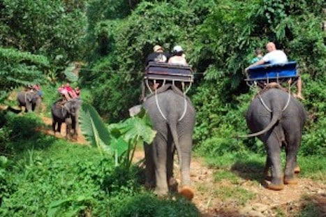 Escursioni a Khao Lak con Elefanti