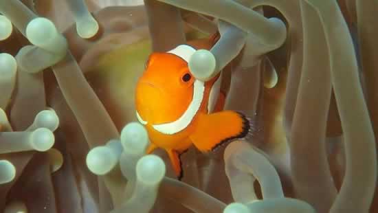 Corsi Sub Phuket - Nemo