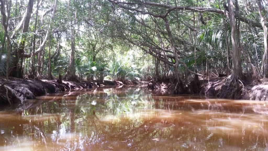 Little Amazon a Takuapa