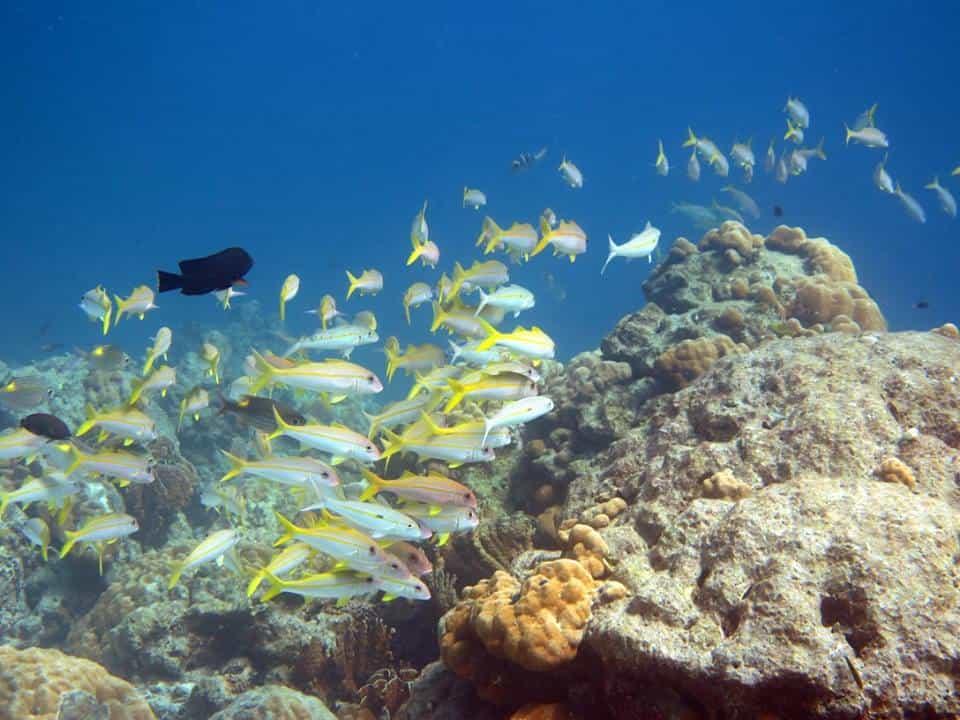 Phuket Escursioni - Snorkeling